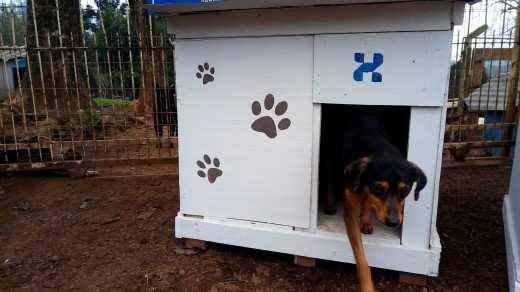 Cães na nova moradia feita por funcionários da Zagonel